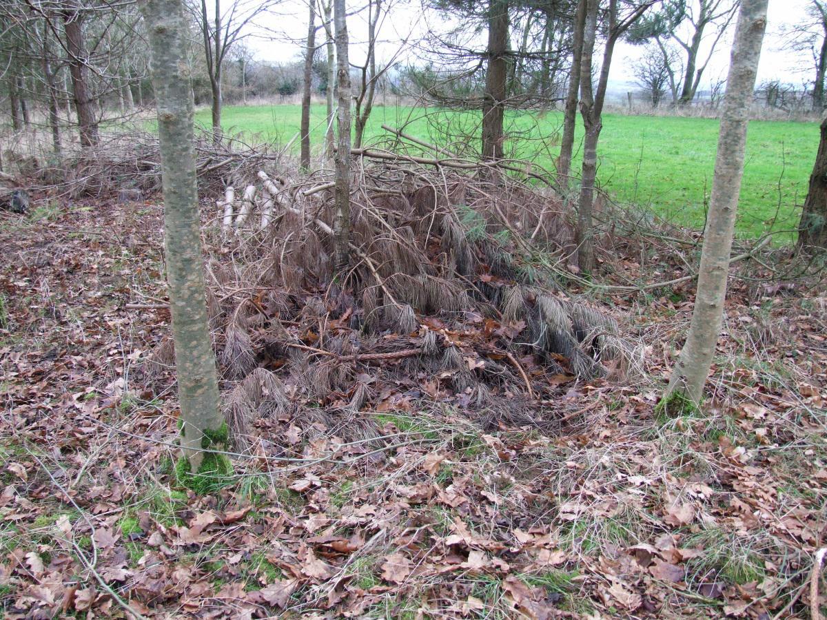 A rough pile of brash