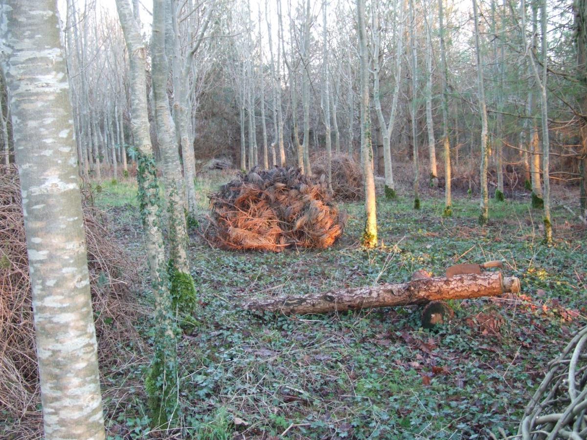 Logs for Labour