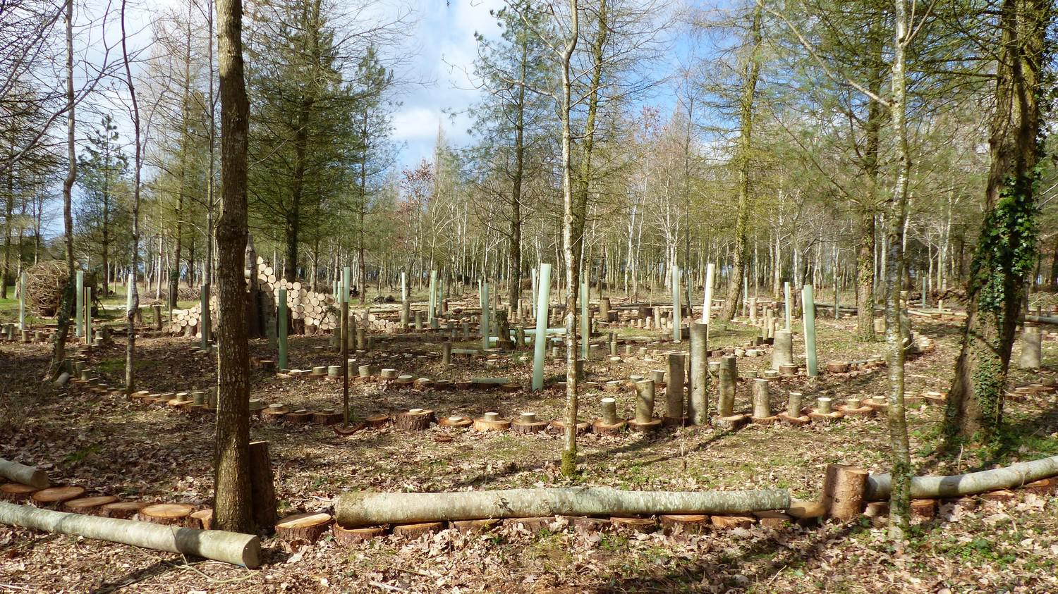 New trees planted into labyrinth walls