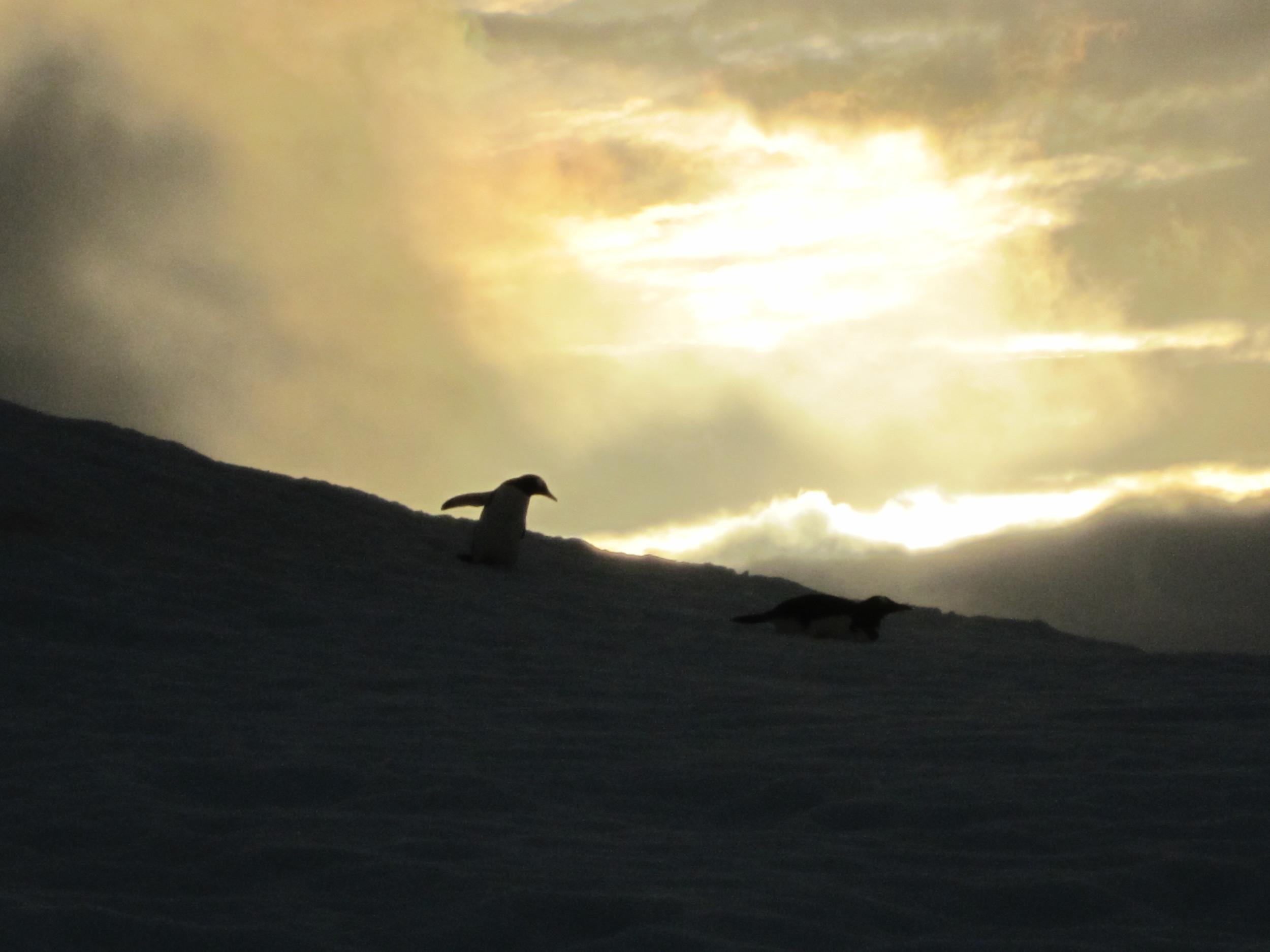 Antarctica 397.jpg