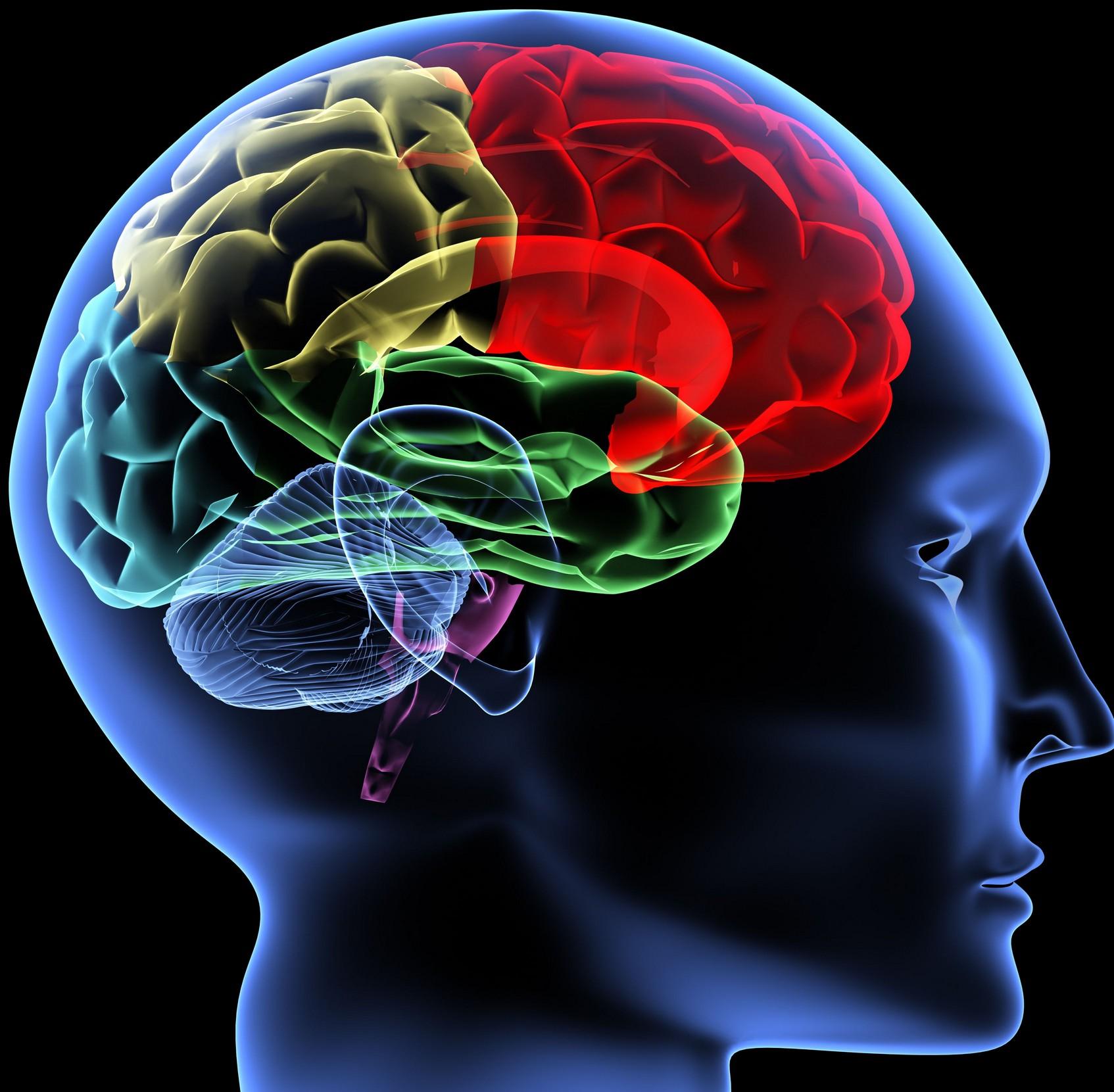 brain 3D mental-illness.jpg