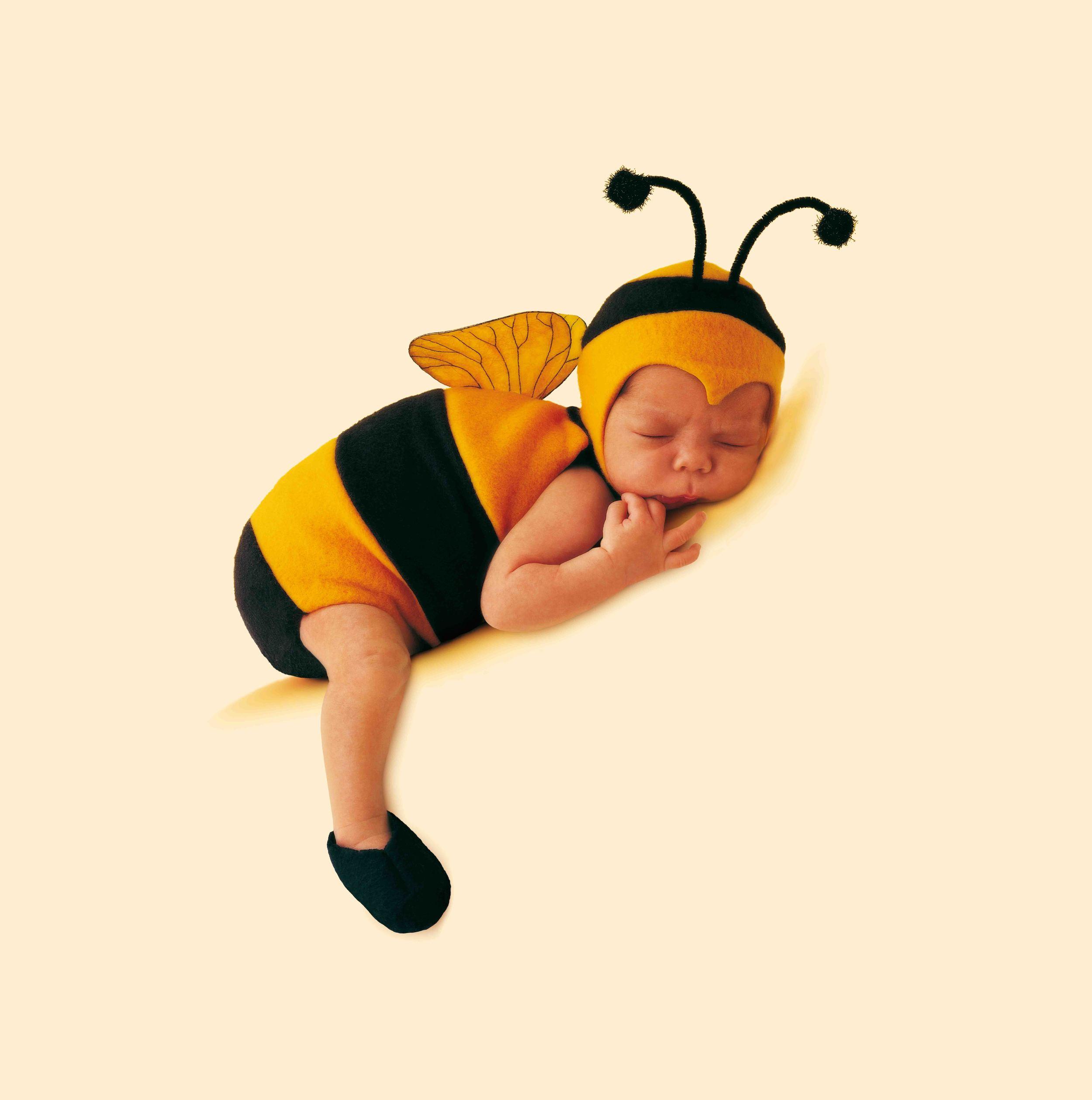 baby bee bassa.jpg