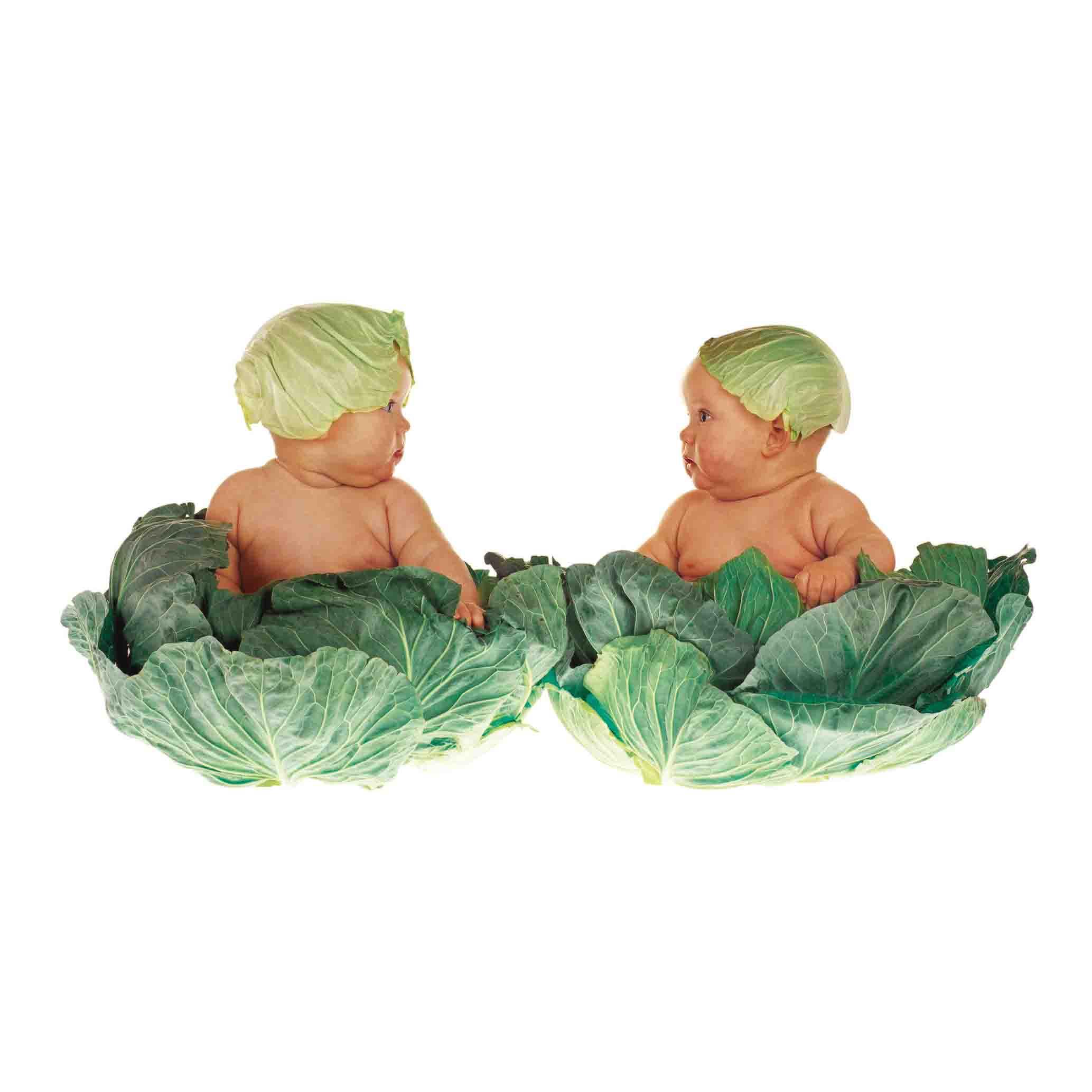 cabbages bassa.jpg