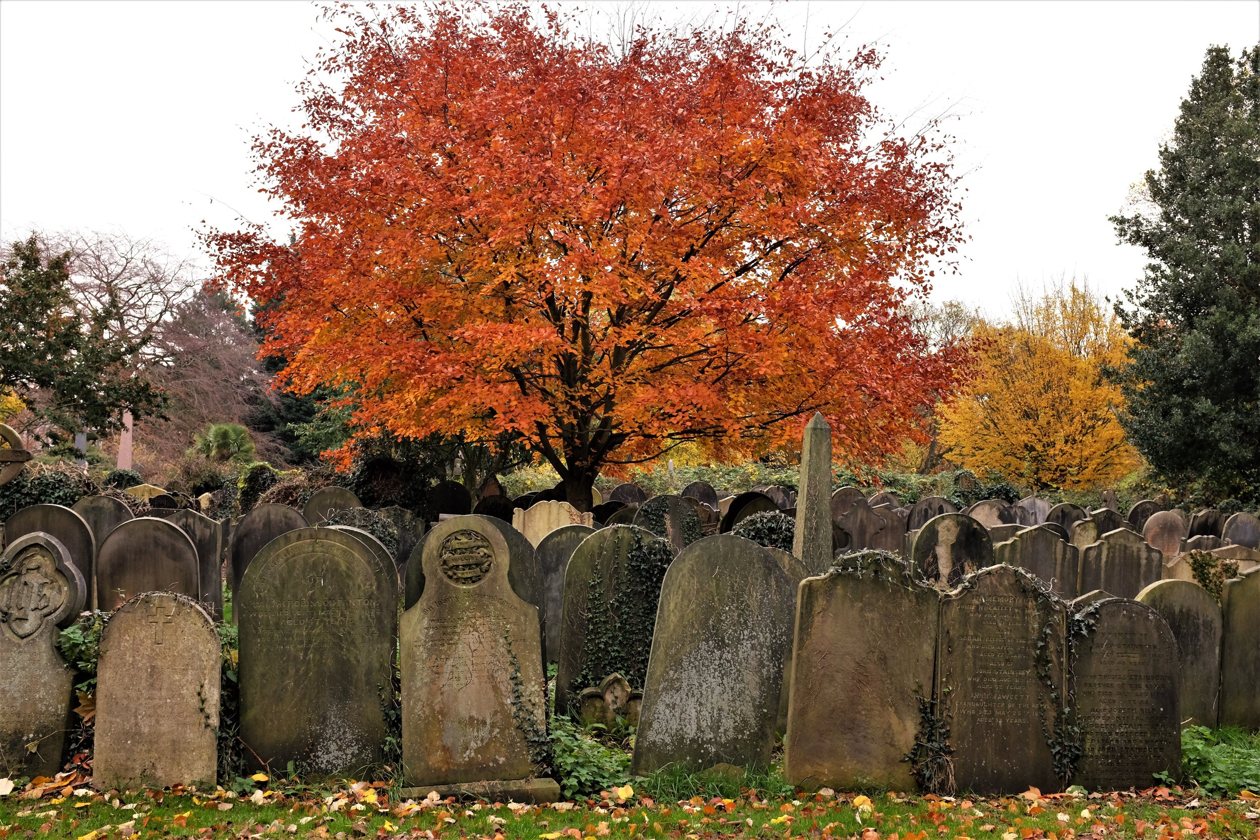 Can Cemeteries Be a Tool for Equity? - Writing