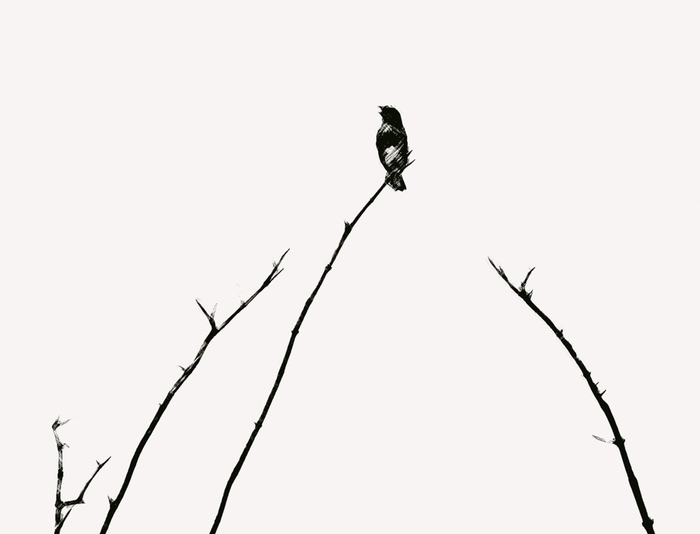 Anne_Anthony-Birdsong1.jpg