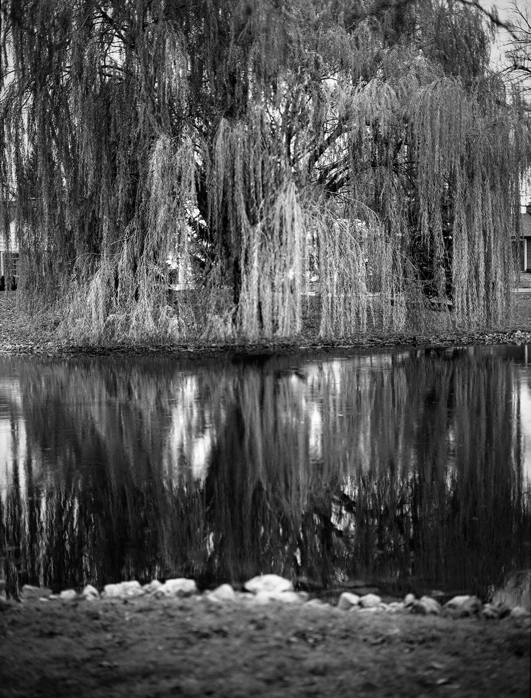 Mirror Lake-Caitlin Crowley-December 09, 2016.jpg