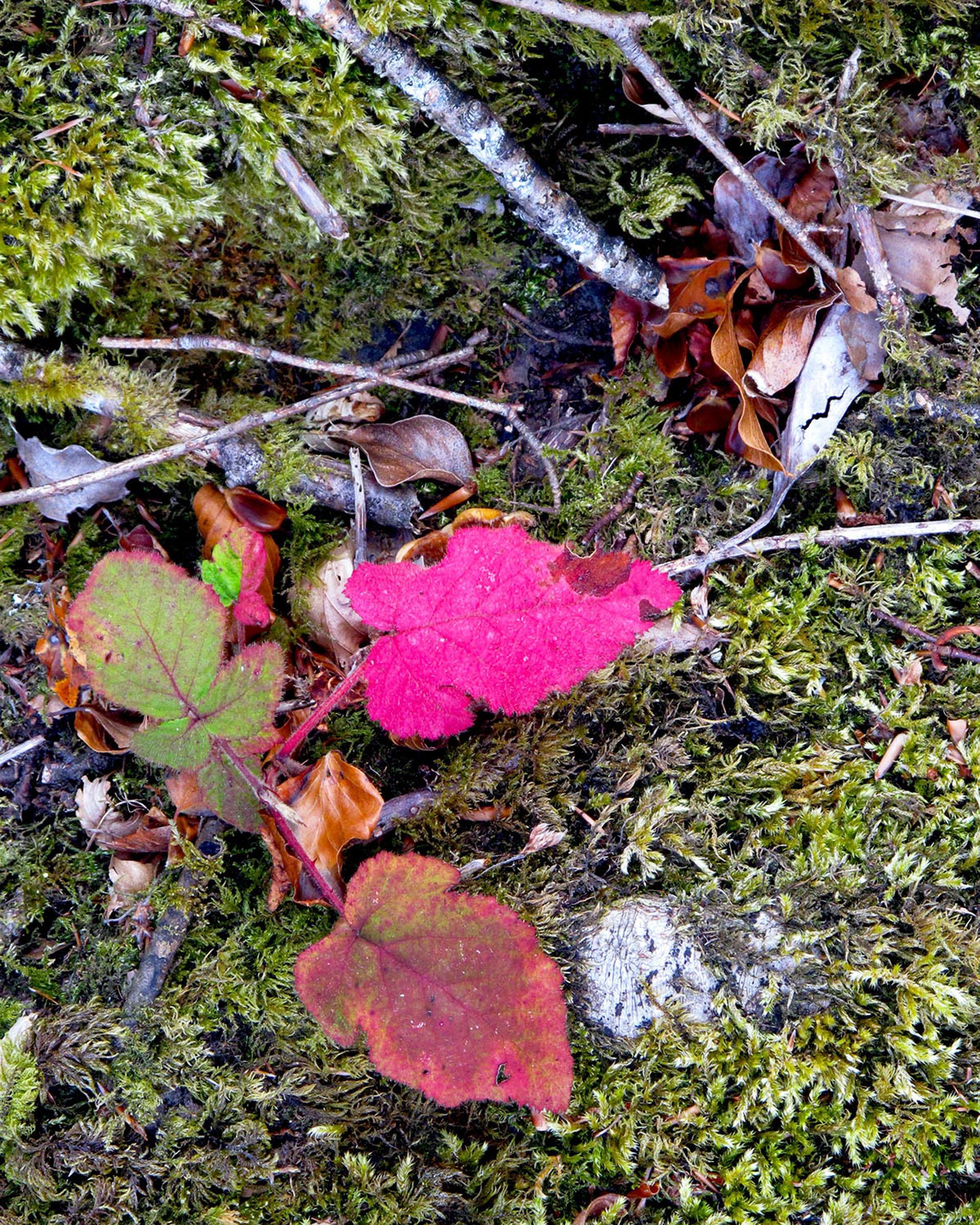 Leaves_Bantry_Ireland.jpg