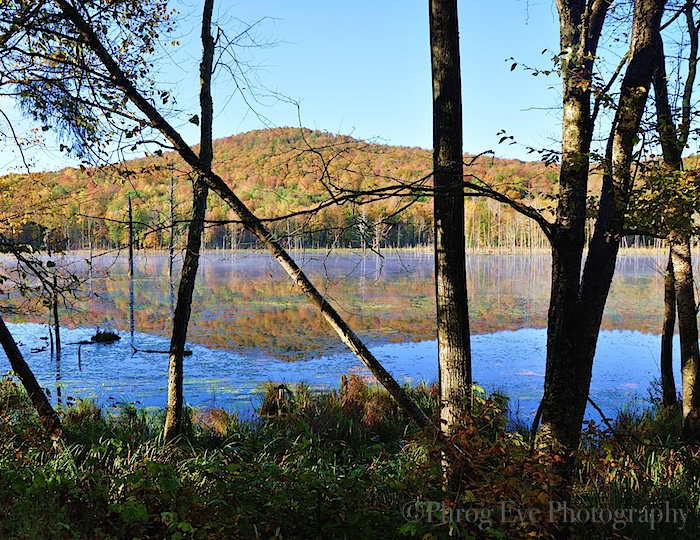 7. Beaver Pond Reflection.jpg