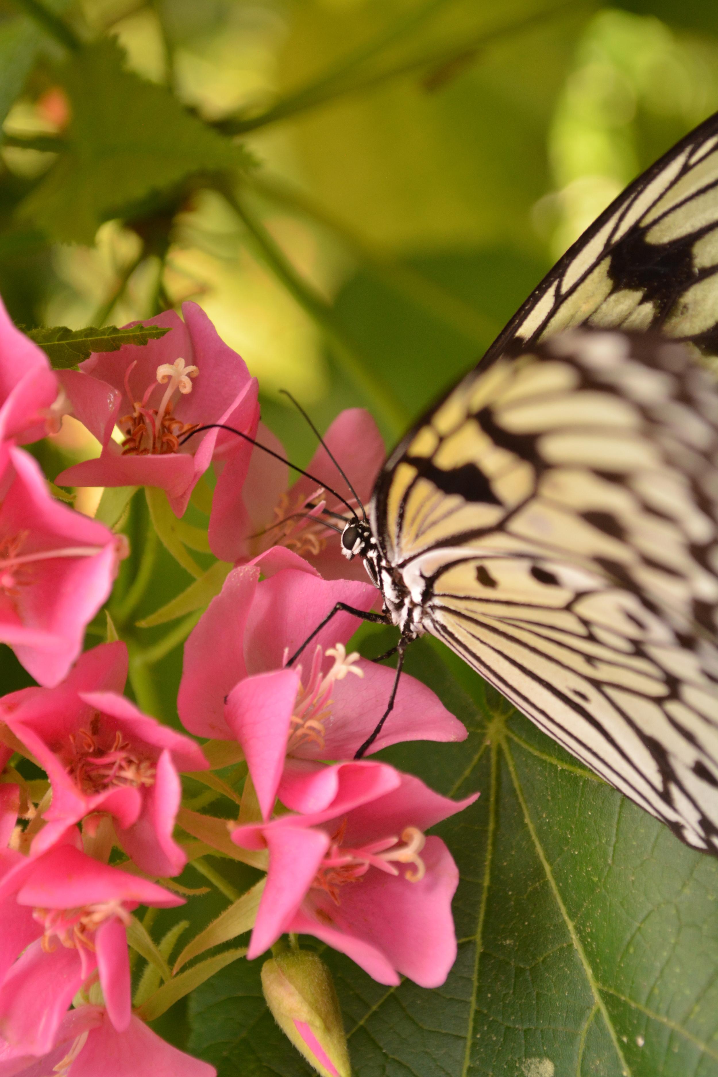 Fairchild Botanical Garden (328).JPG