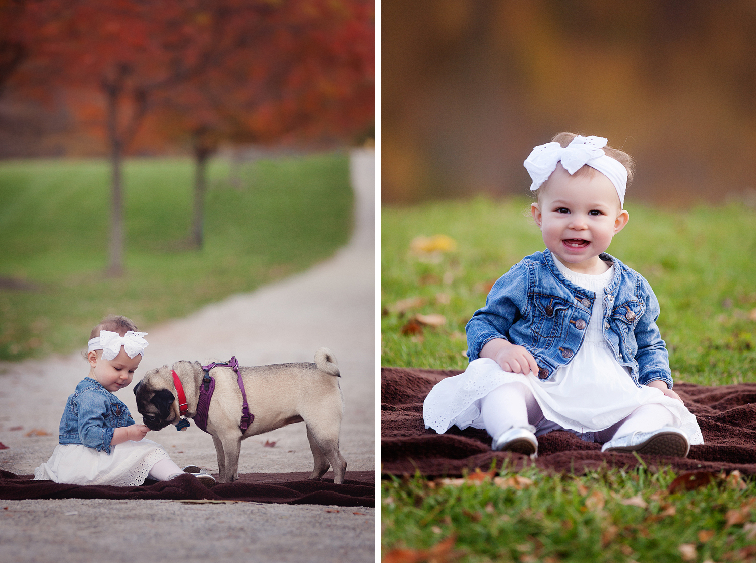fall-baby-portrait-photographer-ohio-pug-dog-akron-cleveland.jpg