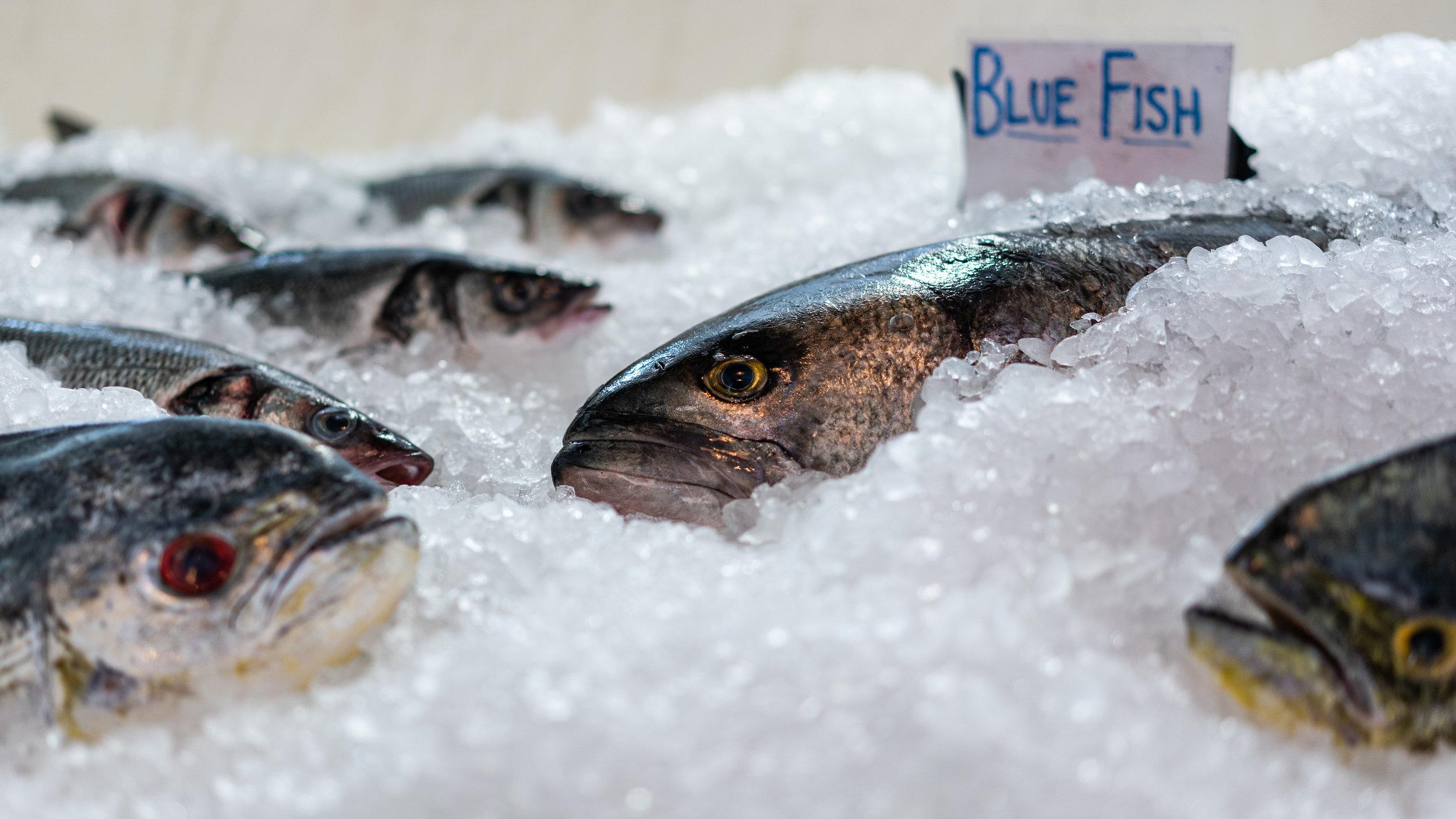 Blue Fish-1.jpg