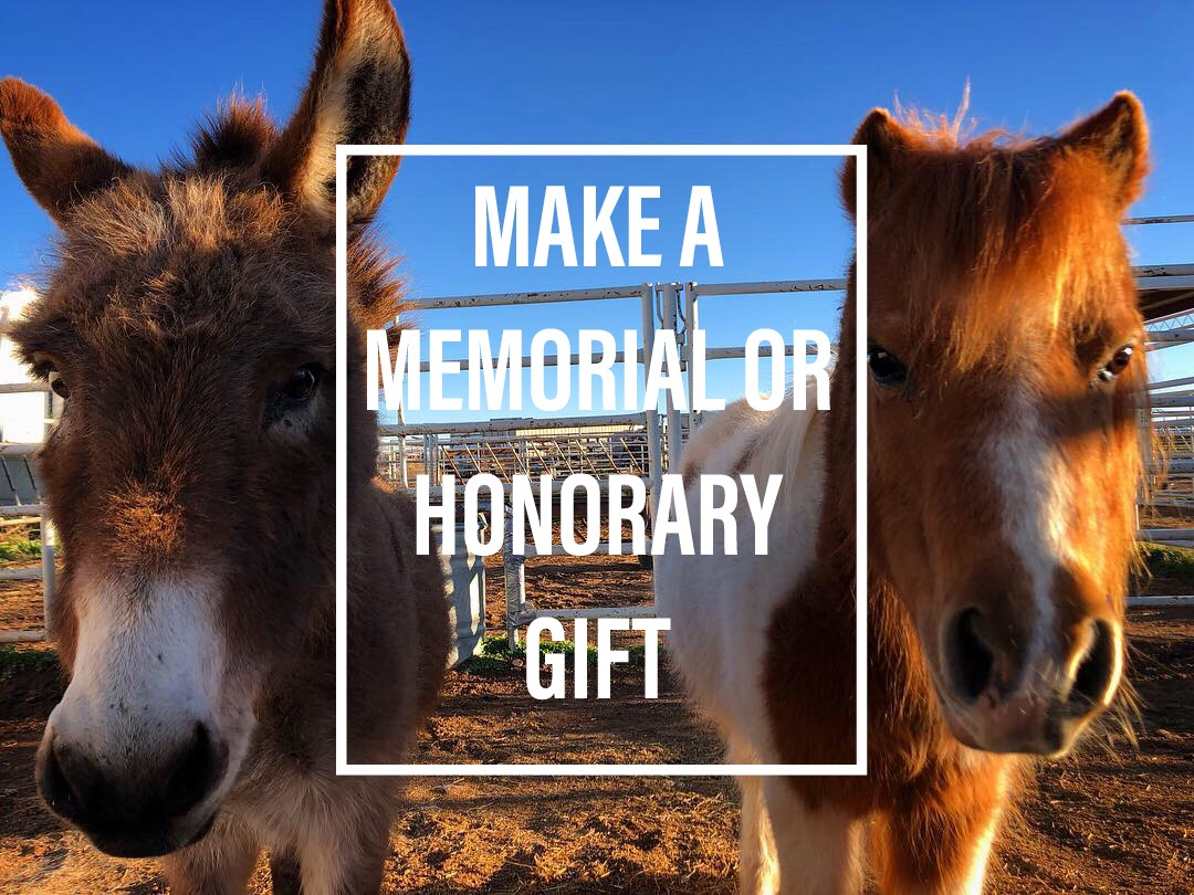Honorary & Memorial Giving - You can make a gift in honor of someone, an occasion such as a birthday or anniversary, or make memorial contributions in the name of an equine loving loved one.**Please provide details of the gift in the notes section when making your gift. If you would like a notification letter sent to an honoree, make sure you include their name and mailing address.For memorial contributions, provide contact information of any family you would like notified of the gift.