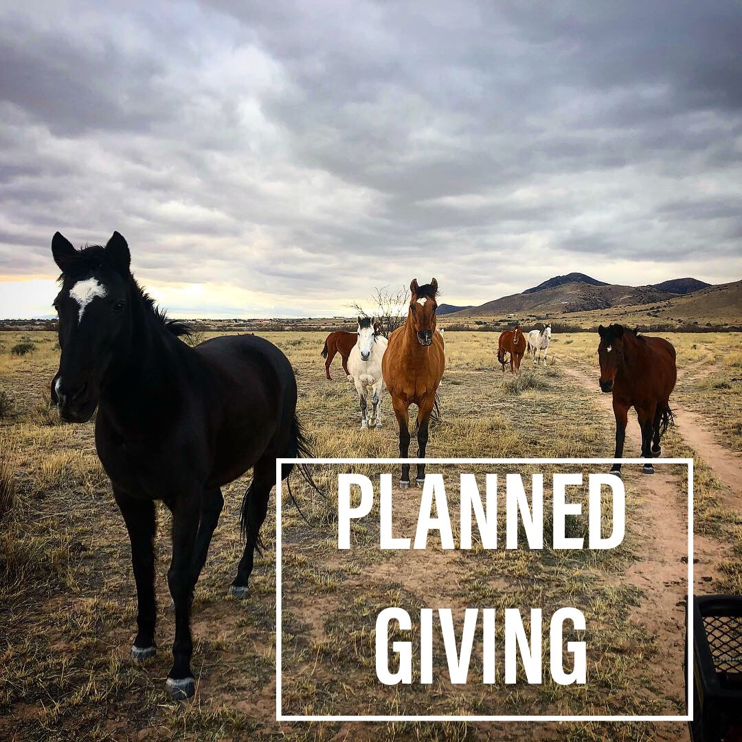 Planned Giving - Leave a legacy by including Horse'n Around Rescue in your estate planning. A planned gift is a contribution that is arranged in the present and allocated at a future date, usually through your will or estate.Consult your attorney for the best way to include a charitable donation in your estate plan.And, contact us should you have any questions about leaving a bequest to Horse'n Around Rescue!Email: horsenaroundrescue@yahoo.com