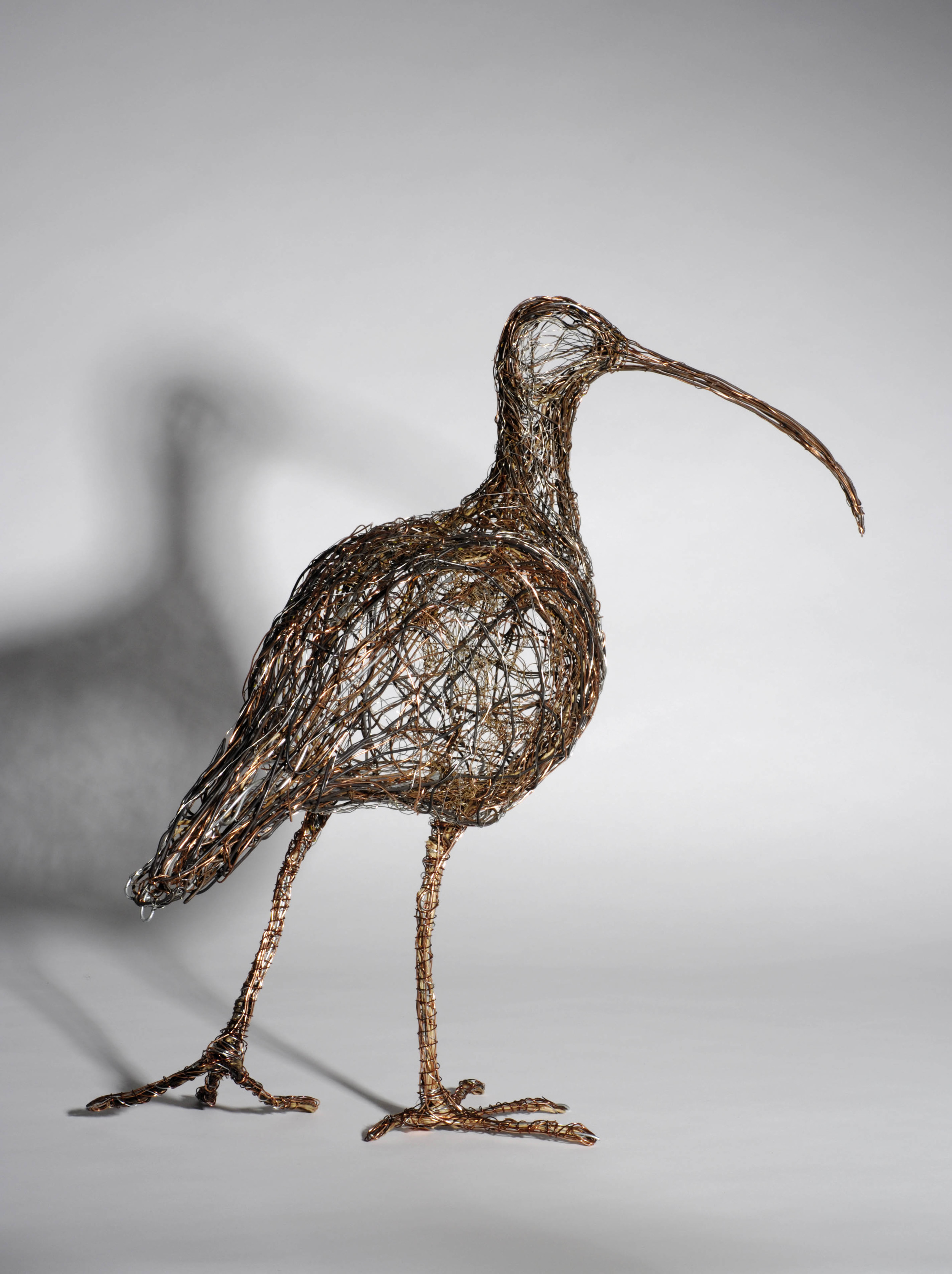 Curlew looking