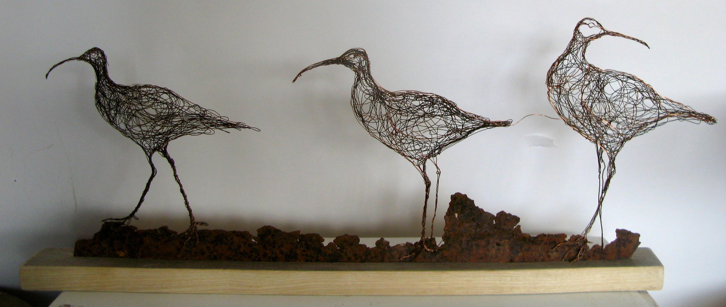 3 Curlews