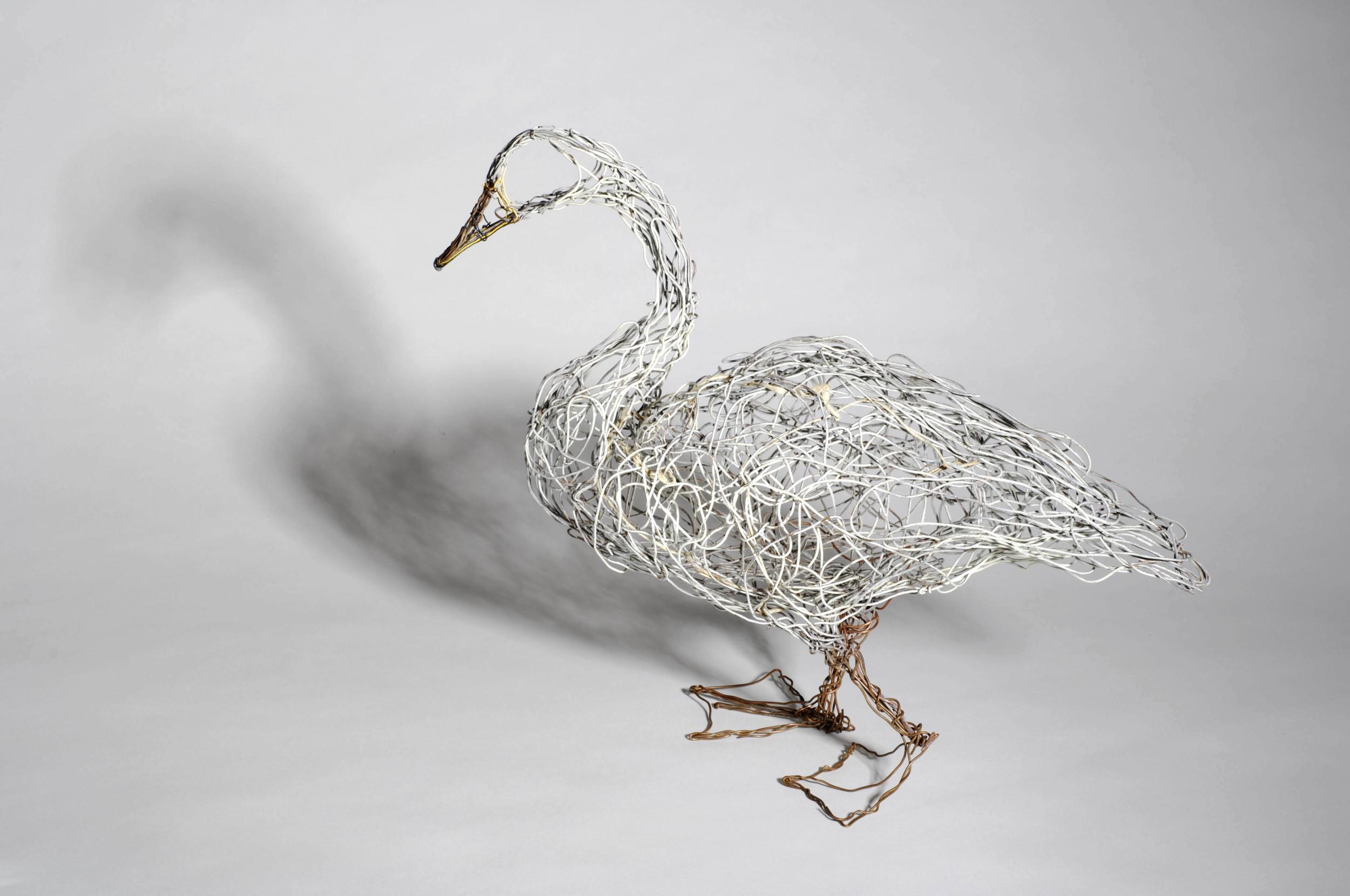 Study of a walking swan