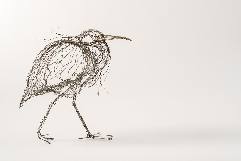 Heron walking