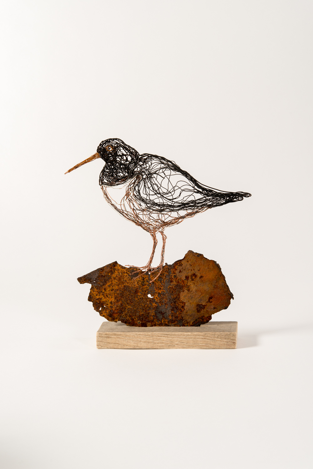 Oyster Catcher on rock