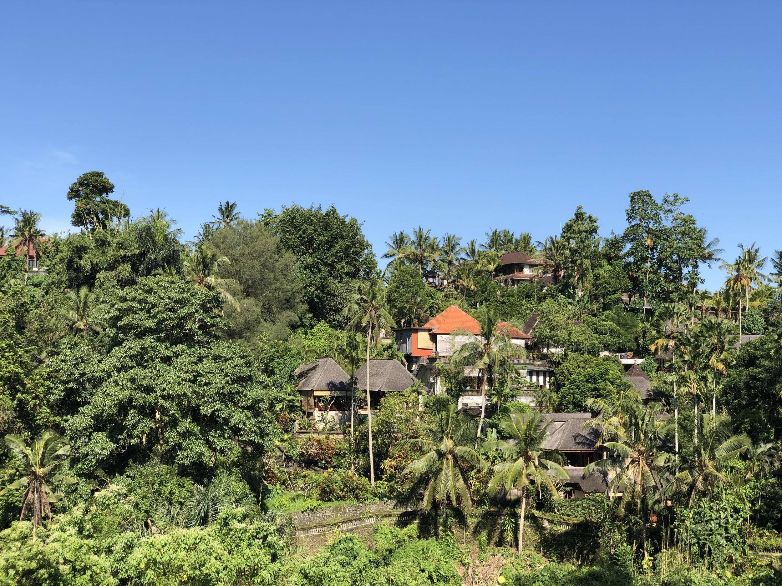 Ubud hiking view.jpg