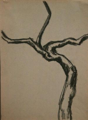 Tree-Washington Square Park. Charcoal pencil. 1970s.