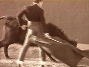 Fight The Bull