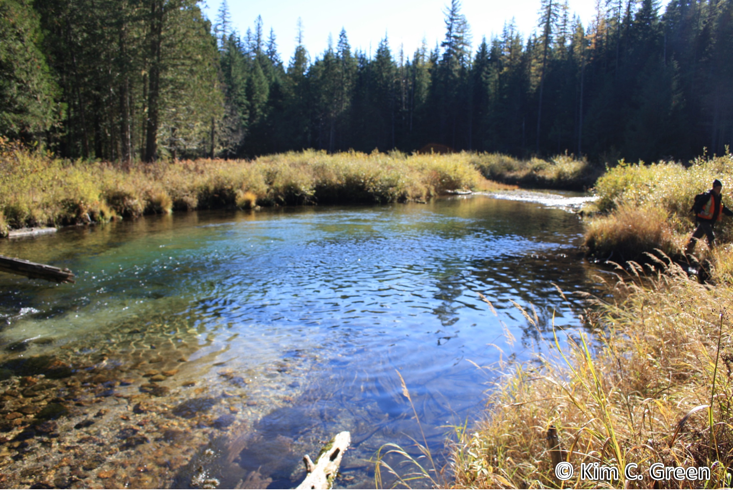 Duhamel Creek – one of my favorite local watersheds