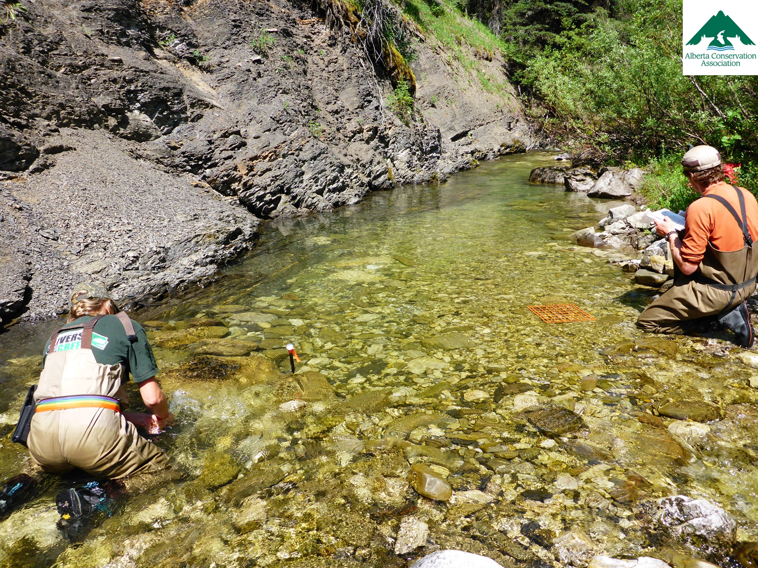Photo credit: Jason Blackburn, Alberta Conservation Association.  ACA Study - Sedimentation Calculation, Grid-toss Method