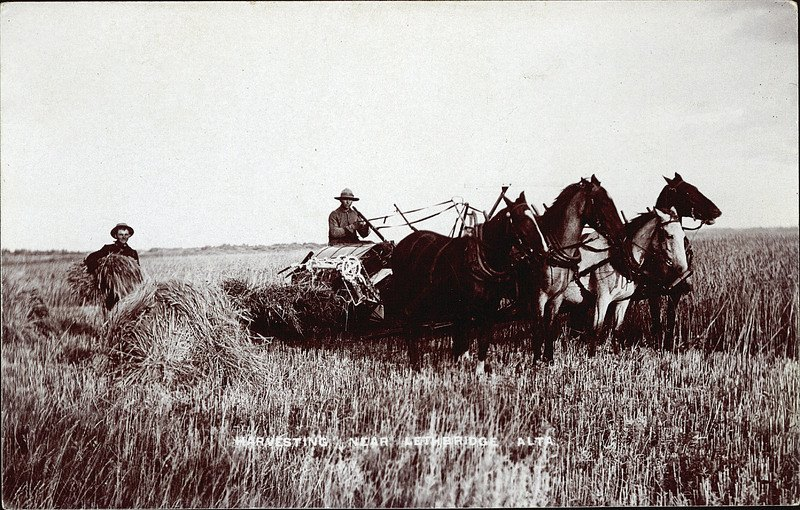 Lethbridge harvest, 1910 - Photo credit: Lethbridge Historical Society