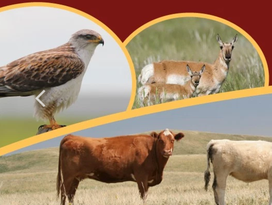 MULTISAR - Provides a variety of tools for landholders interested in conserving Species at Risk. They operate on both private and Crown land.Visit Website →