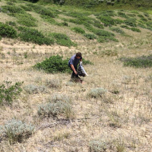 Volunteer collecting garbage along the coulee.