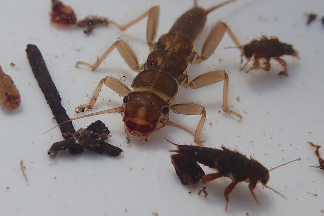 Benthic Macroinvertebrates (BMI) are creepy crawlies that live in the sediment and rocks of our rivers and lakes.