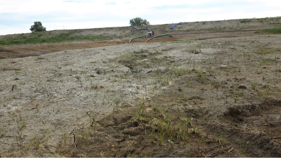 Pumps (background) Were Used to Maximize Seed-Soil Contact During Dewatering""