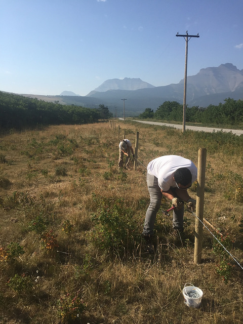 Our Outreach Assistants helped install wildlife-friendly fence to keep cattle out of the creek but still allow wildlife to get over and under.