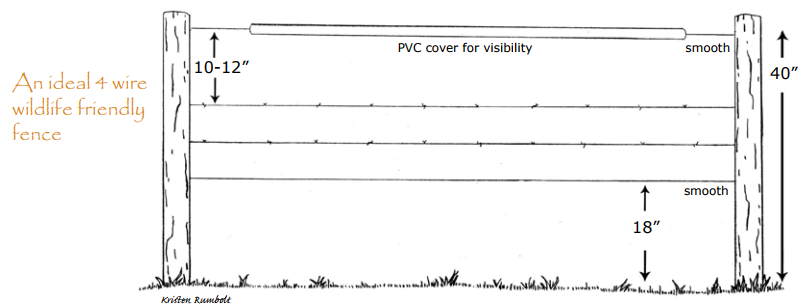 Here is what a wildlife-friendly fence looks like: smooth top & bottom wires, with a raised bottom and lower top wire. Image:  MULTISAR