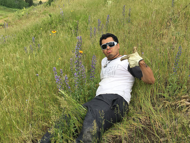 Chico was one of 4 Outreach Assistants busy this summer - here he is battling blueweed!