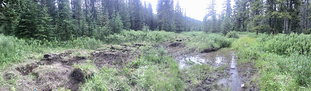 Our work site for the day. We planted densely on the banks around the standing water on the right, and a little less densely in the 'rough and loose' on the left.