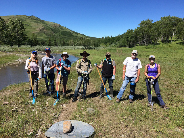 Pulling weeds at the Pincher Creek Watershed Group Blueweed Blitz. July 7, 2018.