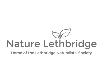 Christmas Bird Count (Lethbridge) - Join the Lethbridge Naturalists' Society for Bird Counts across southern Alberta!