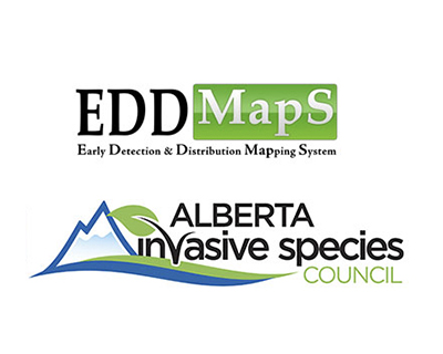 Early Detection & Distribution Maps - Help stop invasive weeds in their tracks by recording sightings across the province.