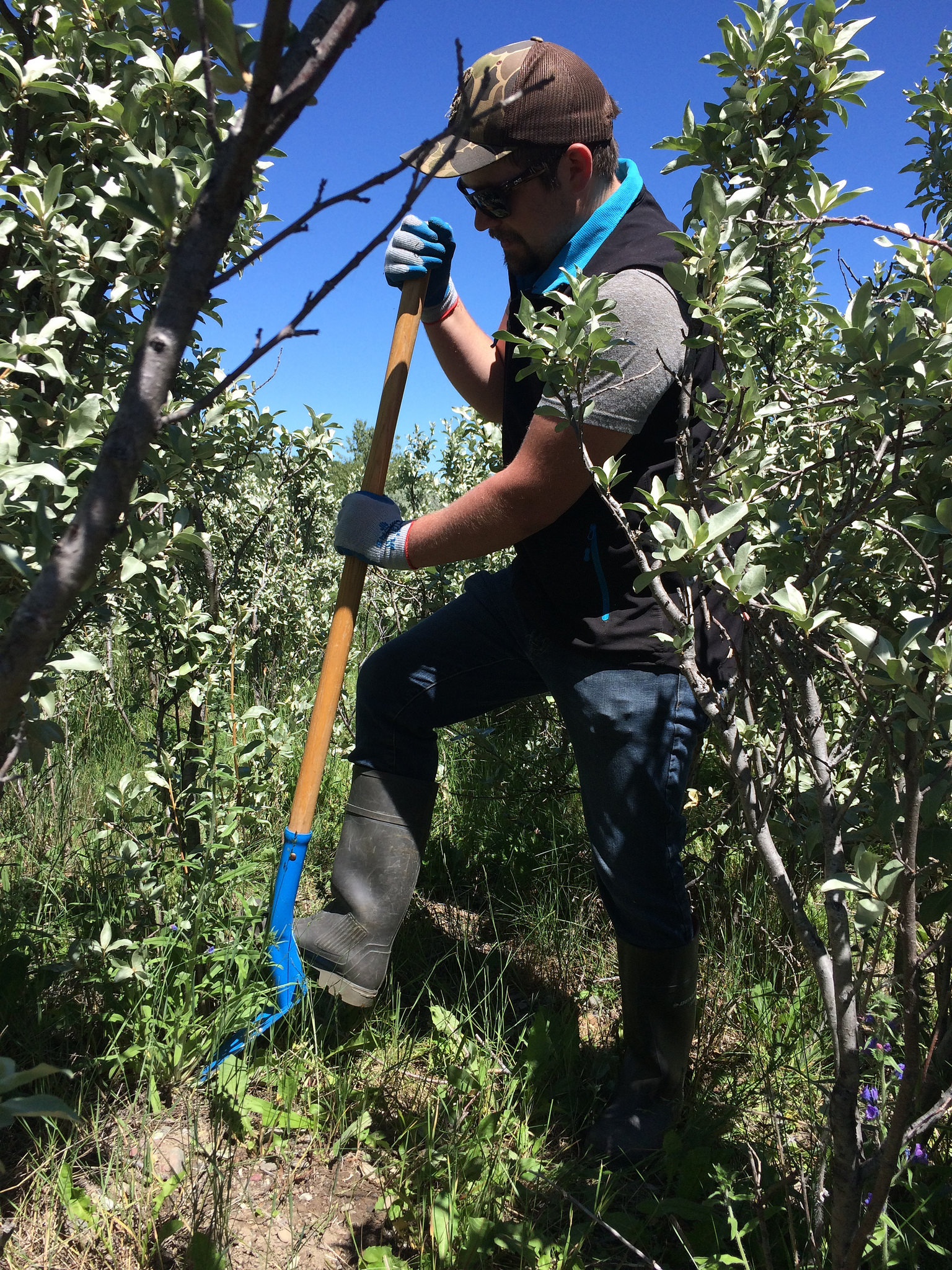 Pincher Creek Watershed Group 2018 Blueweed Blitz