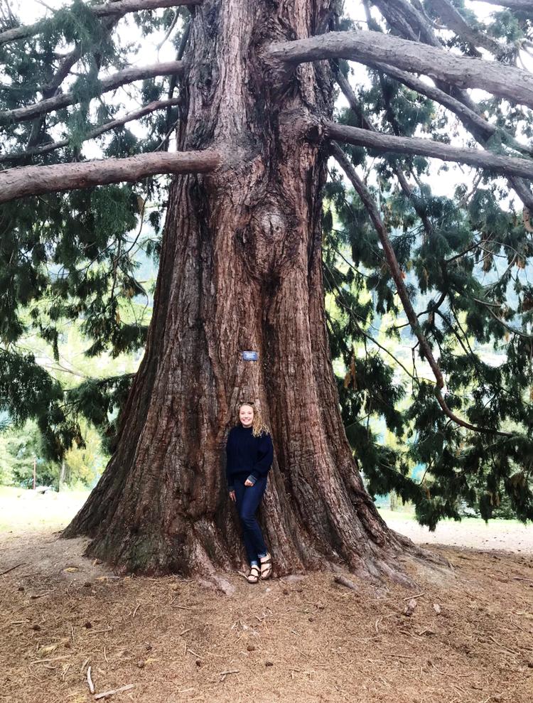 Sydney standing by a Western Red Cedar in Queenstown, New Zealand