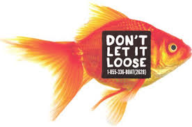 Never release aquarium or domestic pond water, plants, dead or live animals into waterbodies. Image: Government of Alberta