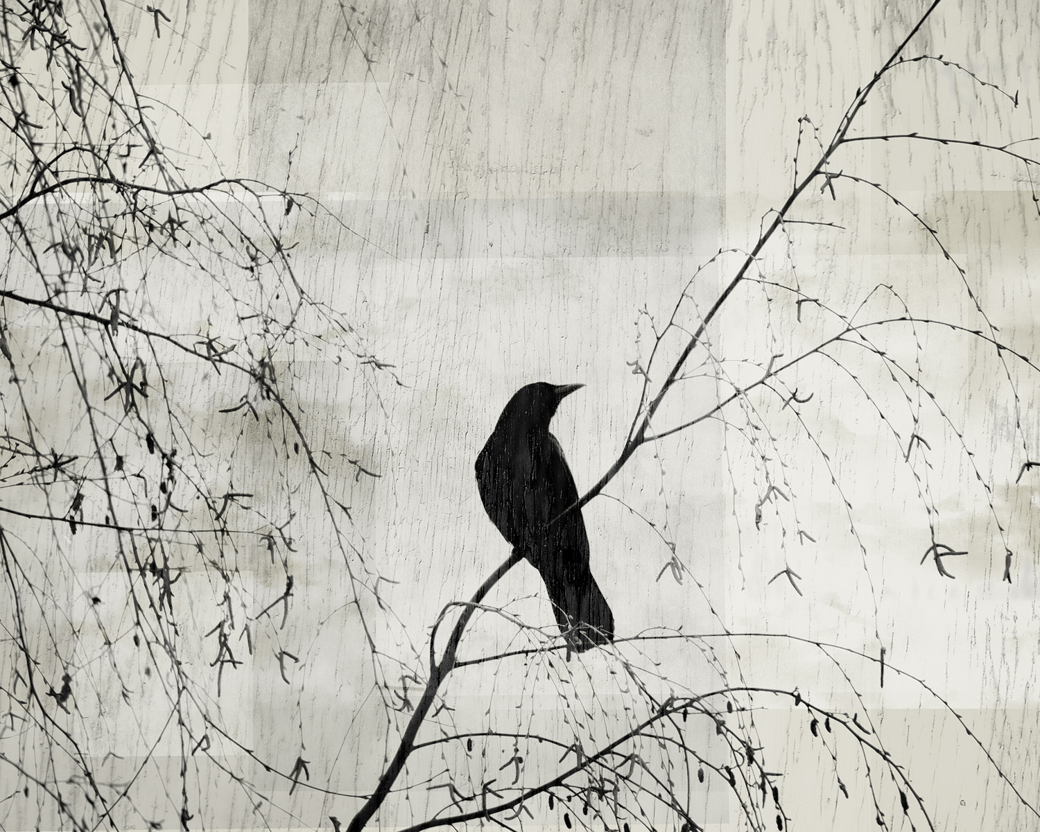 Crow in the Willow