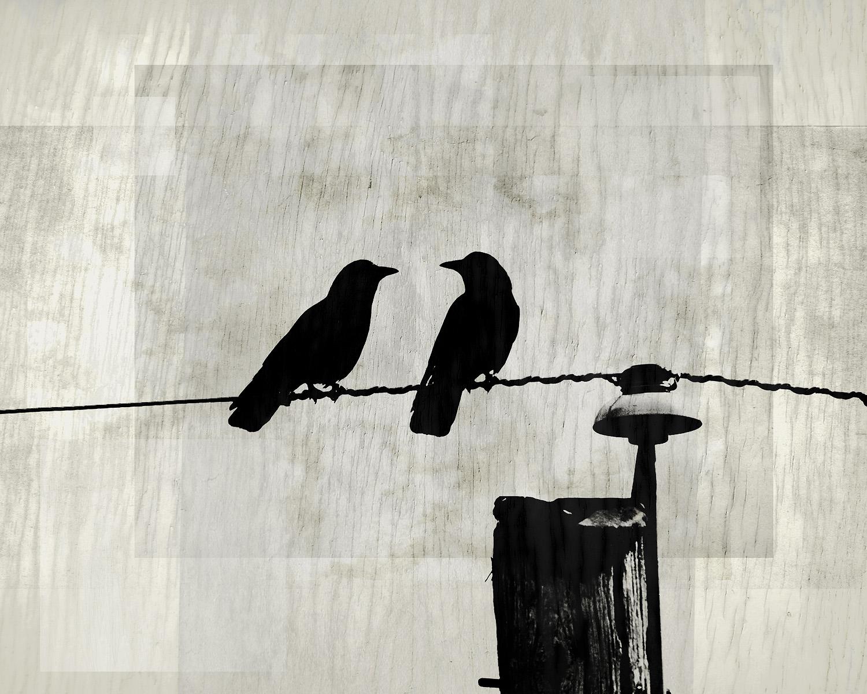 Feathery Pair