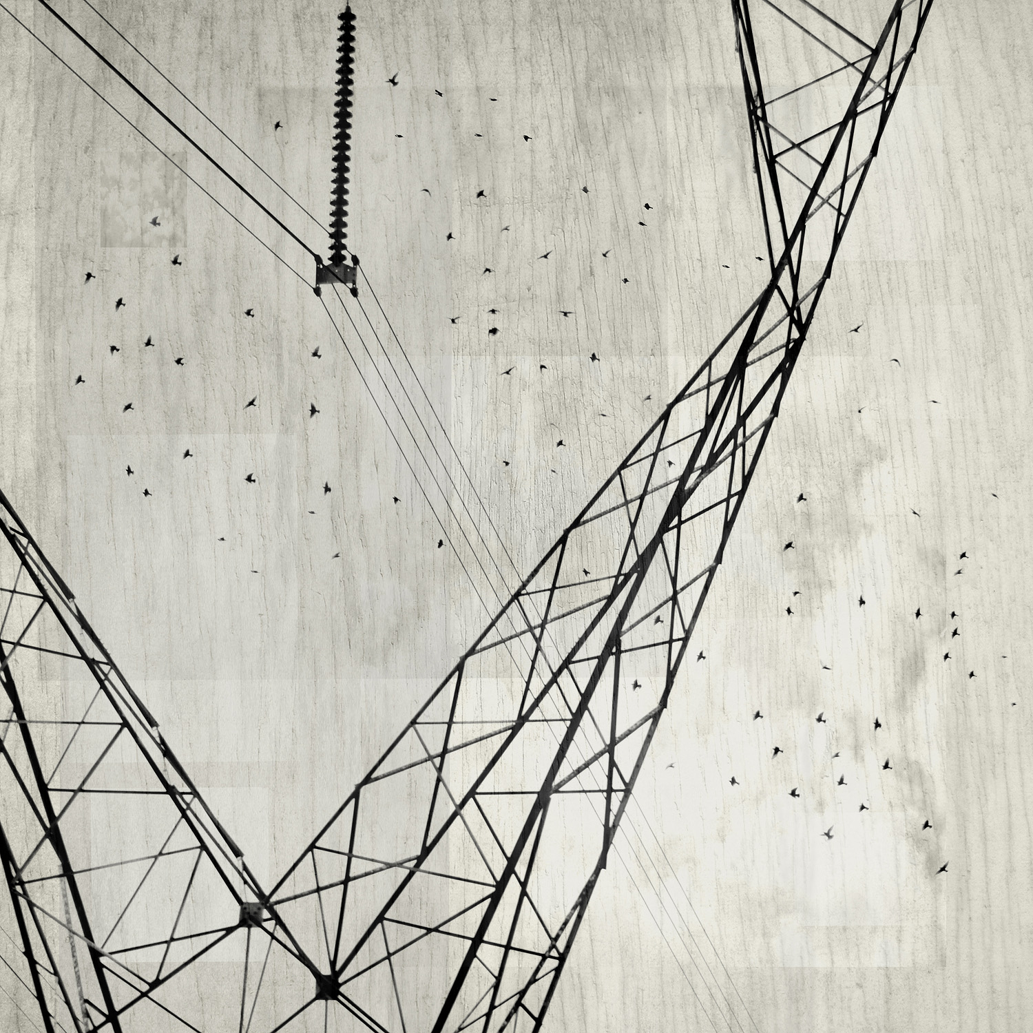 Starling Lines