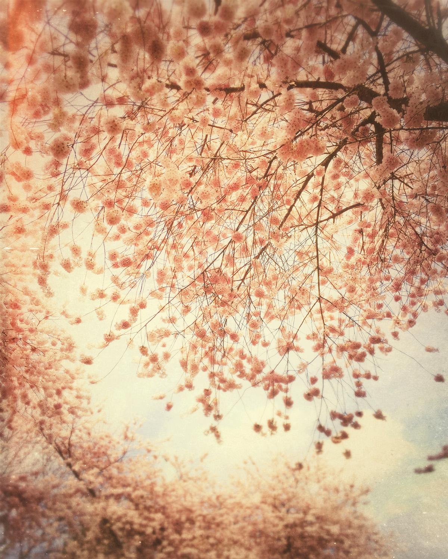 Spring's Blush