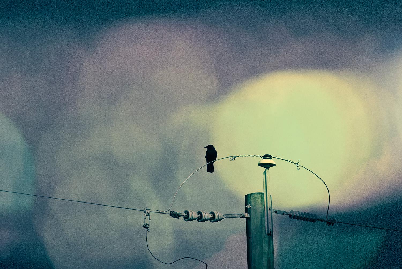 The City Crow