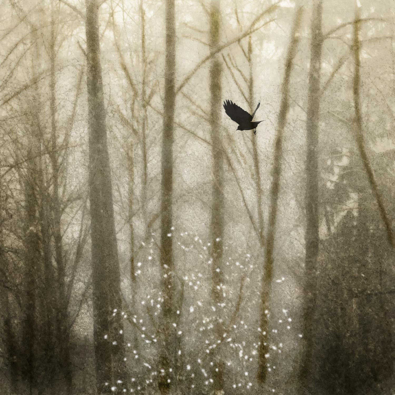 Transcending The Fall