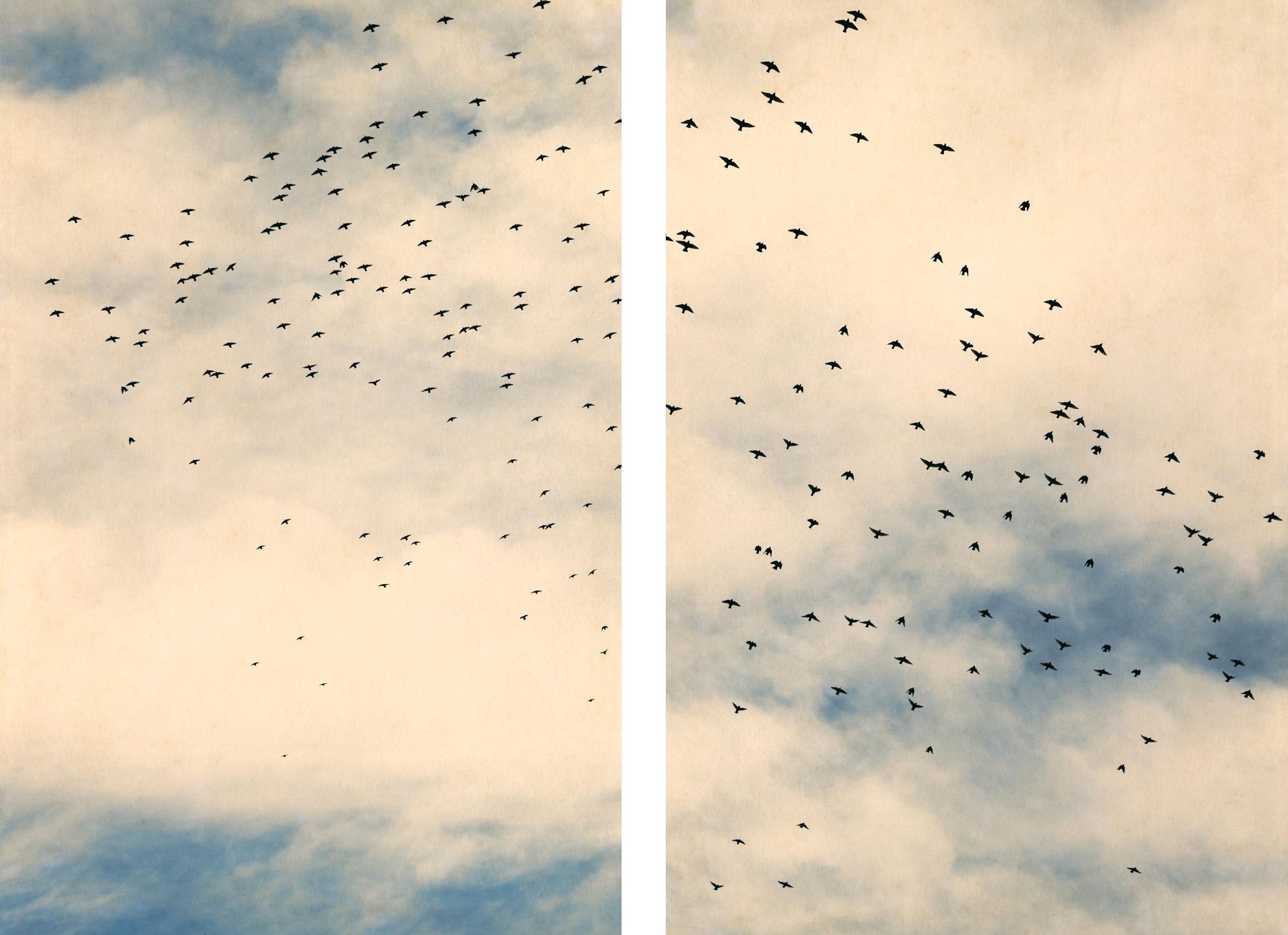 Starlings and Sky iii & iv