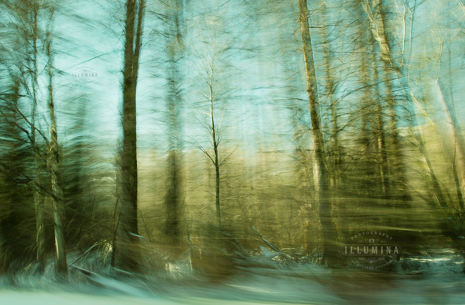 Moved By Trees ii
